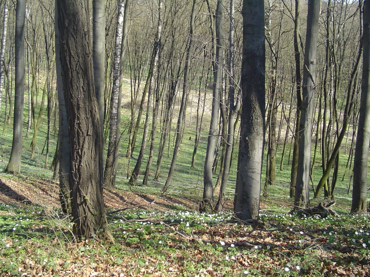 The forest of Lysynychi - an unknown number of people were murdered here. Nothing commemorates them.