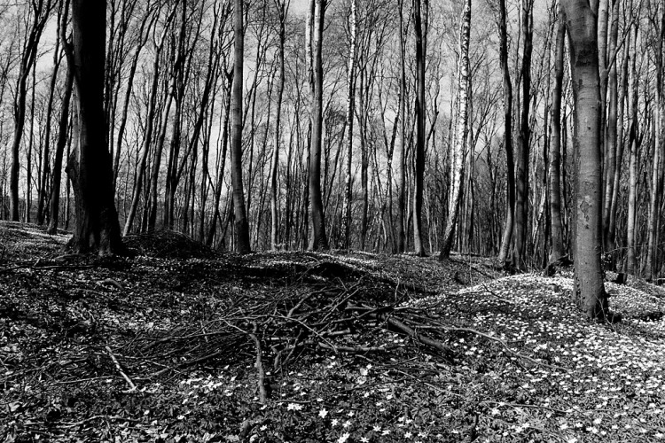 Lviv (Lwow, Lemberg), unmarked mass graves in the forest of Lysynychi,  April 2013