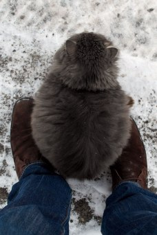 A warming cat on my shoes
