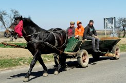 Solca - horse-drawn cart