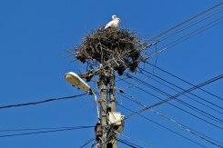 Arbore - stork