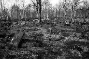 Brodno Jewish cemetery