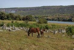 Vadul-Raşcov Jewish cemetery, Moldova