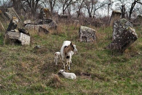 Orhei Jewish cemetery, Moldova